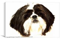 Teddy, Canvas Print
