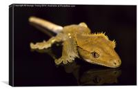 Holly the Crested Gecko, Canvas Print