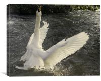 Swan angel, Canvas Print