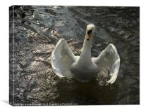 Swan Hug, Canvas Print