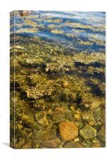 Rock shore, Canvas Print