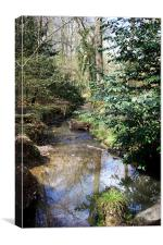 Spring Stream, Canvas Print