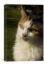 Mucky Cat, Canvas Print