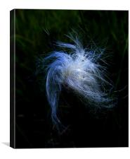 Cotton Grass Study, Canvas Print
