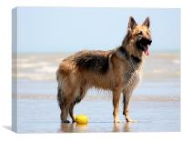 German Sheperd With Yellow Ball, Canvas Print