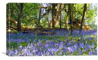 Bluebells In The Woodland, Canvas Print
