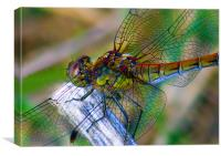 Dragonfly Close-up, Canvas Print