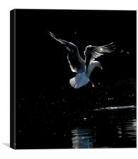 Seagull Landing, Canvas Print