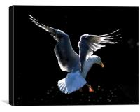 Seagull Landing Study 2, Canvas Print