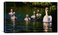 Swan with Cygnets, Canvas Print