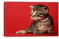 one week old kitten, Canvas Print