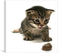 curious  kitten, Canvas Print