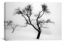 A tree in the snow, Canvas Print
