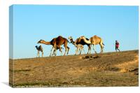 A bedouin and a herd of camels, Canvas Print