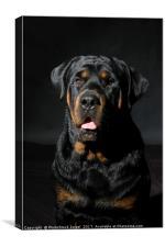 Rottweiler, Canvas Print