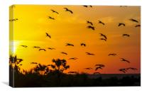 Africa, Kenya, birds at sunset, Canvas Print