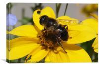Pollination, Canvas Print
