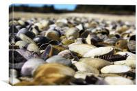 Shells, Canvas Print
