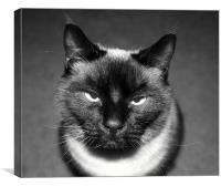 Angry Cat, Canvas Print