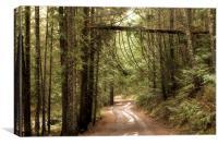 A bridge between trees, Canvas Print