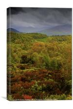 View from the Queen Elisabeth Forest Park, Canvas Print