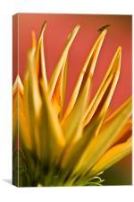 Bloom, Canvas Print