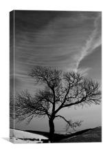 Lonely tree under great sky, Canvas Print