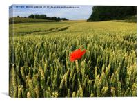 lone Poppy watches over field of hope and glory , Canvas Print