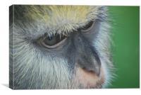 Monkey Face, Canvas Print
