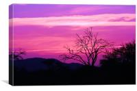 South African Sunset, Canvas Print