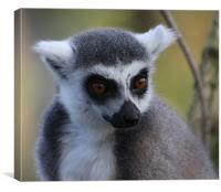 Ring Tailed Lemur 2, Canvas Print
