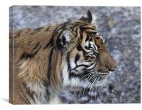 Tiger 2, Canvas Print