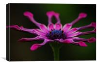 Pink Perfection, Canvas Print