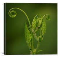 Green Curls, Canvas Print