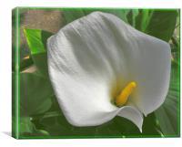 White Orchidea, Canvas Print
