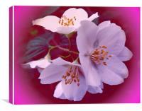 fruit tree flowers, Canvas Print