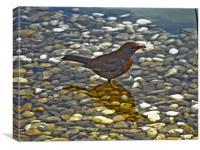 Small Bird, Canvas Print
