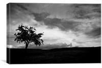 Lonley Tree !!!