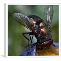 FLY-2, Canvas Print