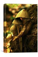 autumn mushrooms, Canvas Print