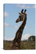 Giraffe, Canvas Print