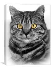 Silver Feline, Canvas Print
