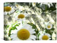 Daisy Bubbles, Canvas Print