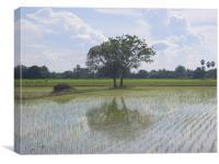 Thaipaddyfield, Canvas Print