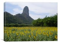 Lopburi sunflowers and mountain, Canvas Print