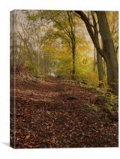 Autumn in Brantingham Woods, Canvas Print