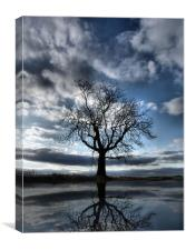 Wintering Oak Tree, Canvas Print