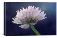 Chive, Canvas Print