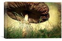 Underneath the Mushroom, Canvas Print