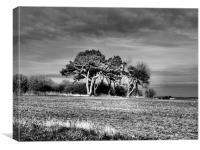 3 Trees, Canvas Print